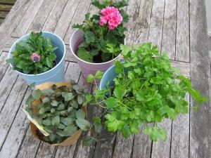 Balkonpflanzen für einen sonnigen oder halbschattigen Balkon