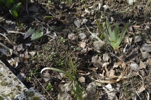 Garten im März - Eckbeet
